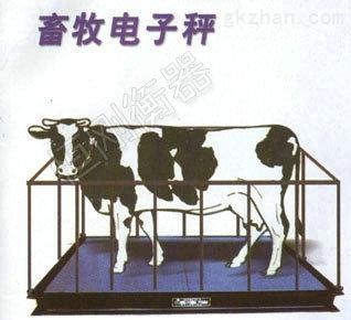 畜牧秤8.jpg